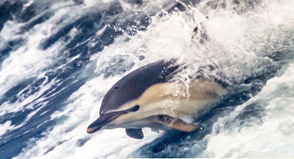 Book a Whale & Dolphin Sea Safari