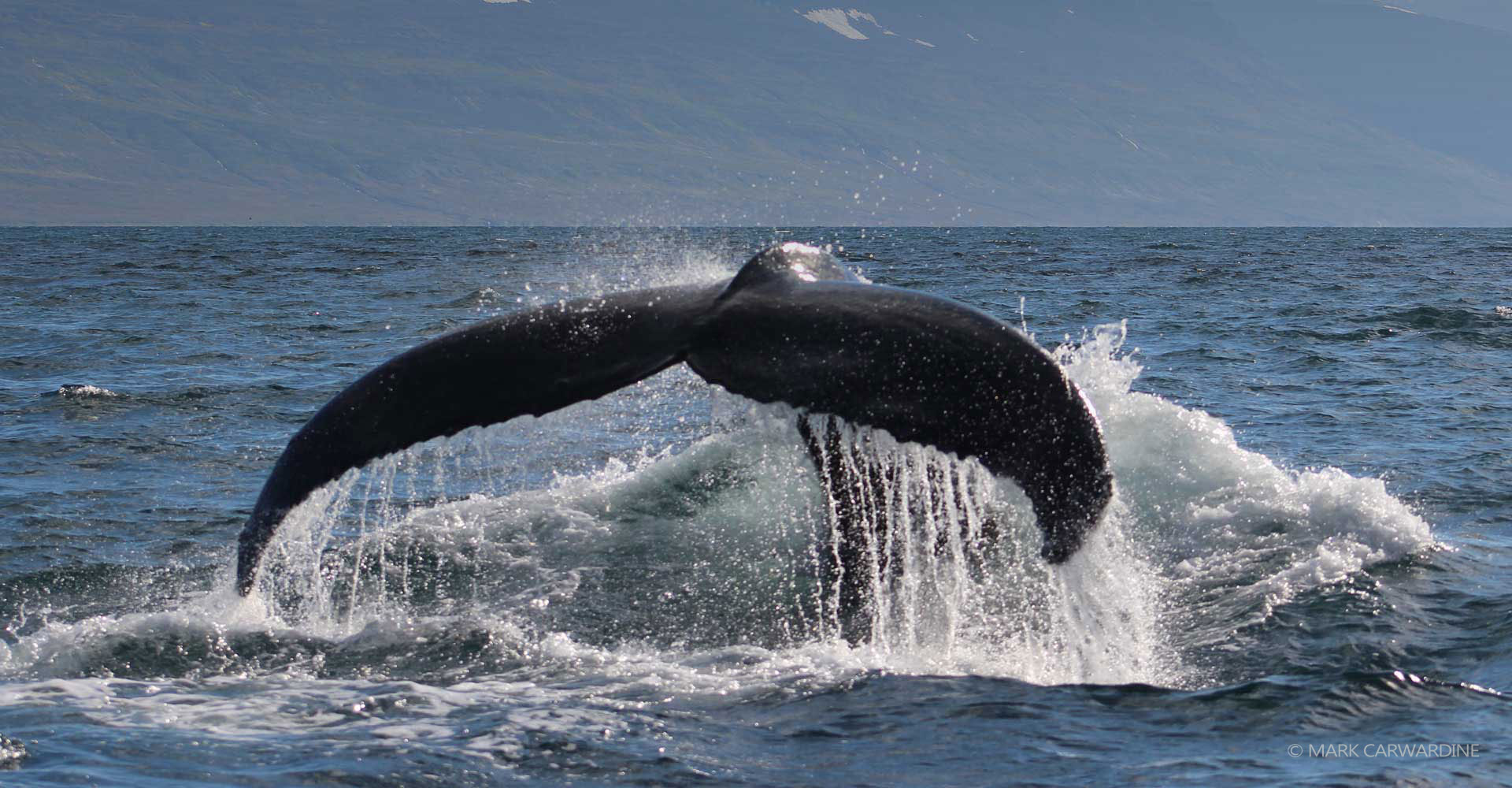 Explore whale species and sightings
