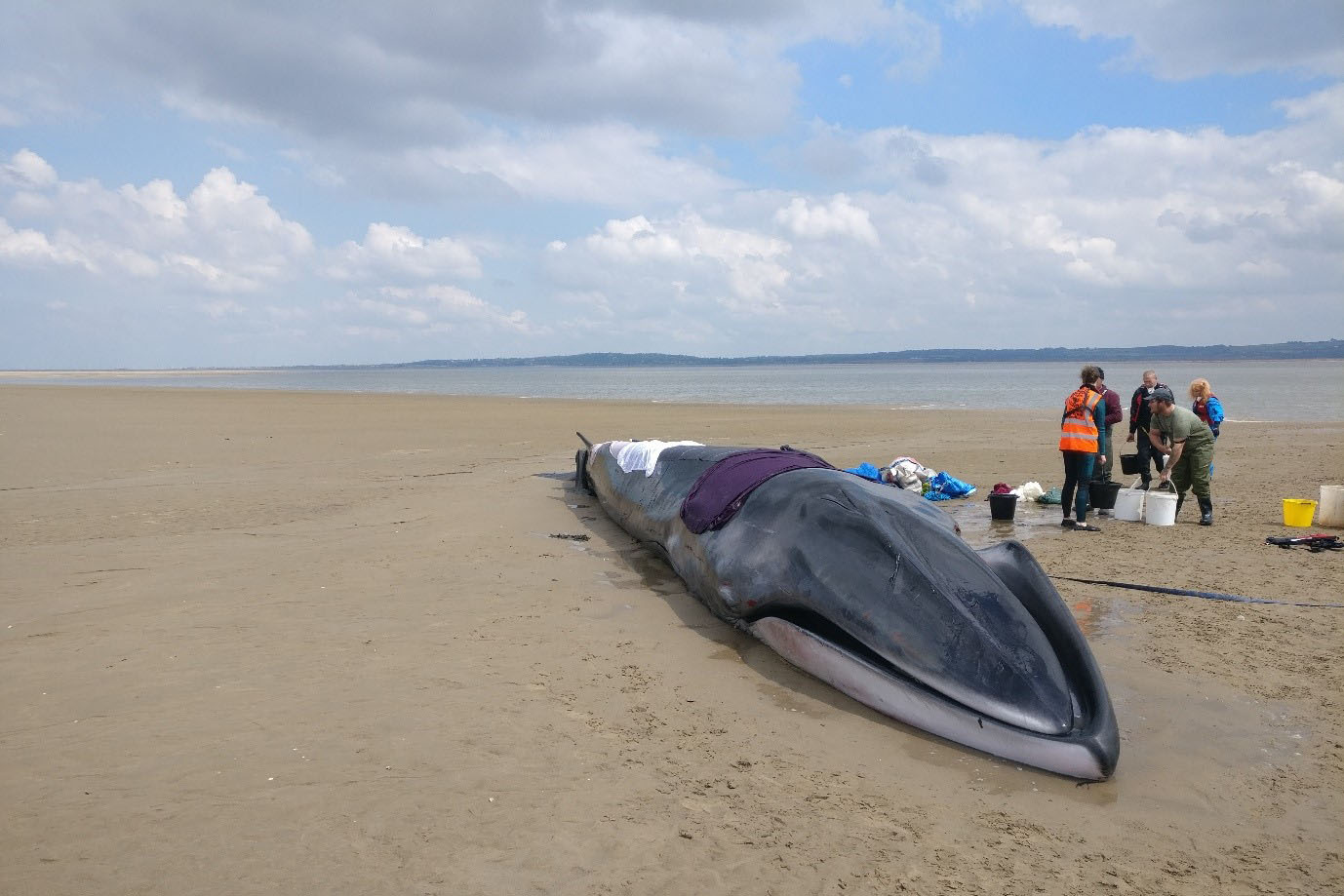Hebrides Wildlife Officer attends fin whale stranding
