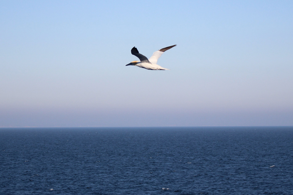 The nature of the North Sea