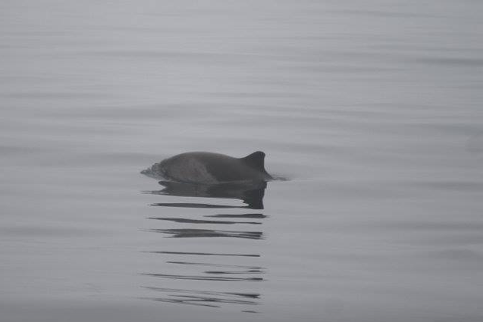 An ode to the harbour porpoise