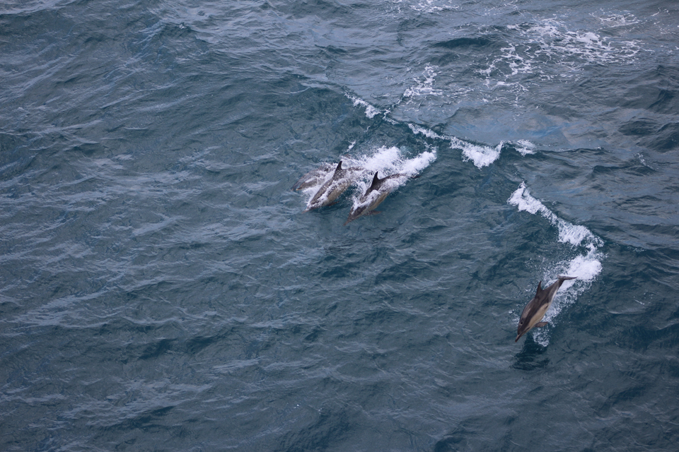 It's 'dolphin-tastic' out there!