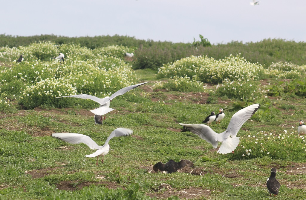 Farne Islands – it's for the birds!
