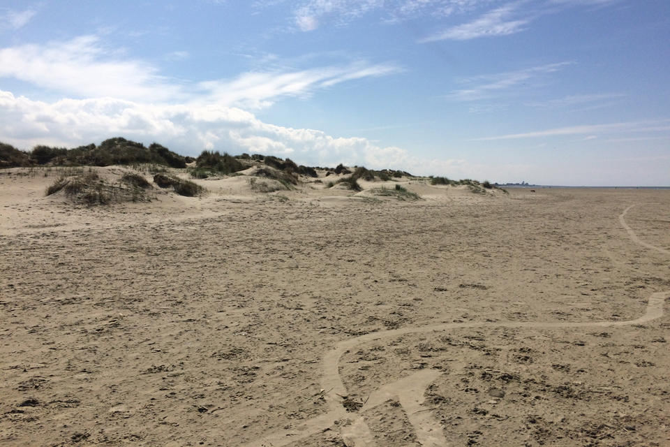 Beach cleans in Newcastle and Ijmuiden