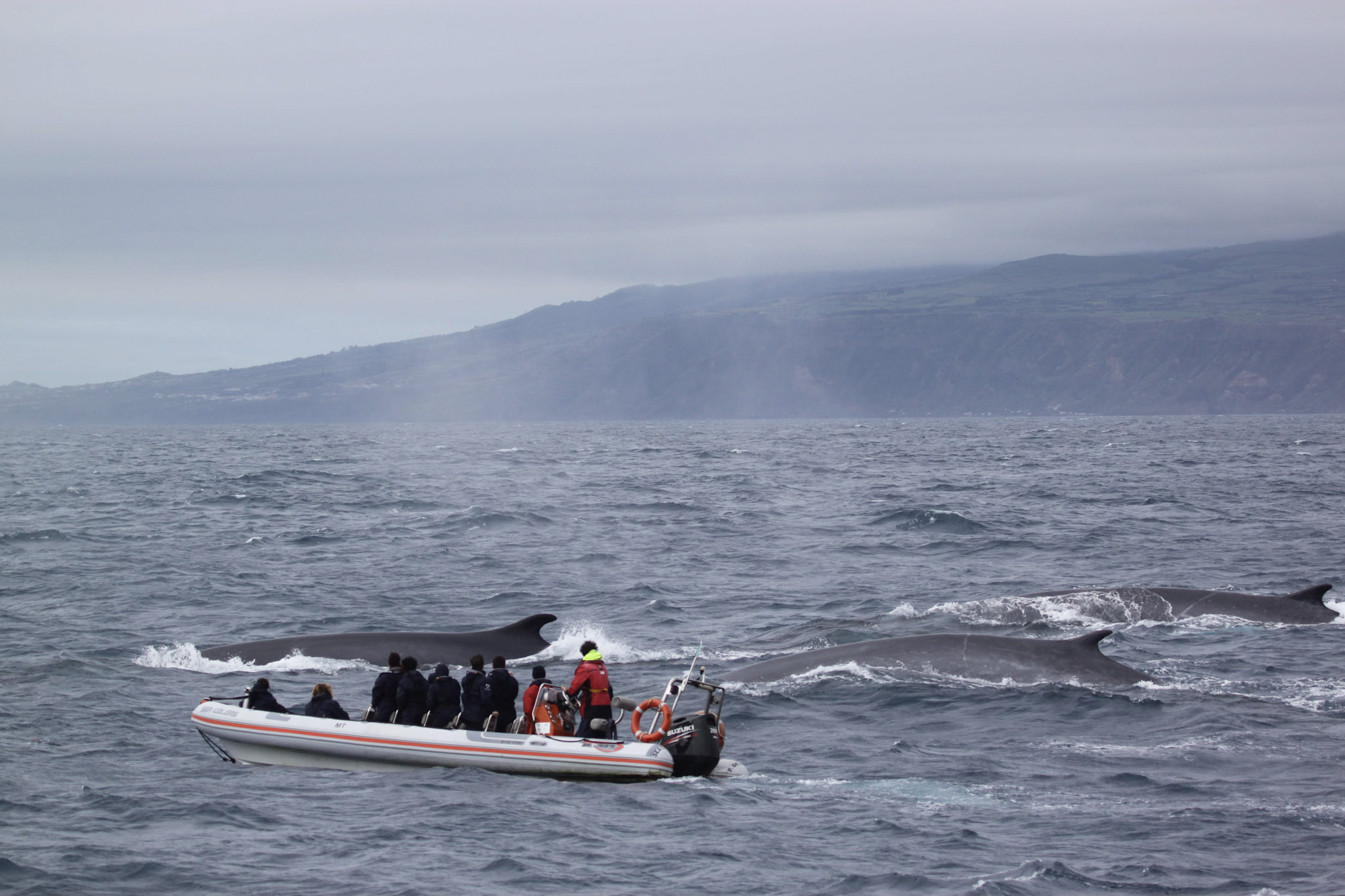 New tool launched to promote sustainable whale watching