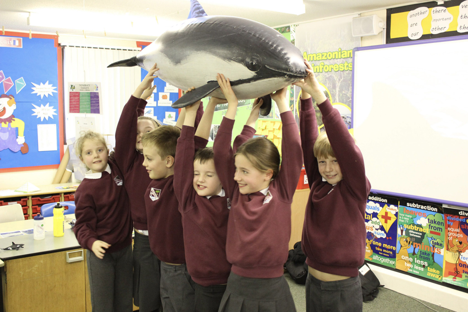 It's Whale Education Month!
