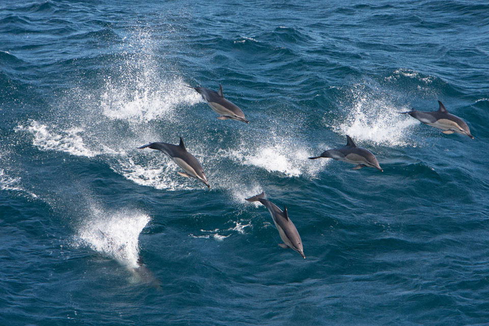 New campaign to protect wildlife at sea launched